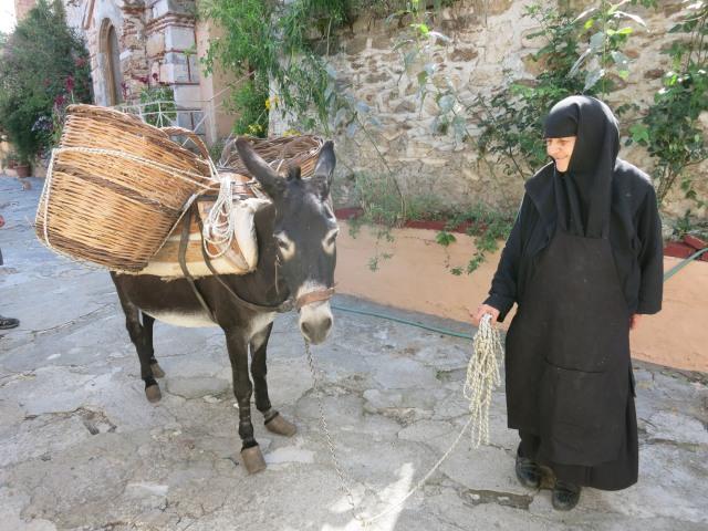 donkeynun